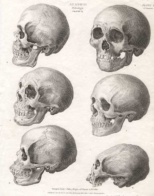 Medical Anatomy. Osteology. Cranium. Head Study antique print c1807
