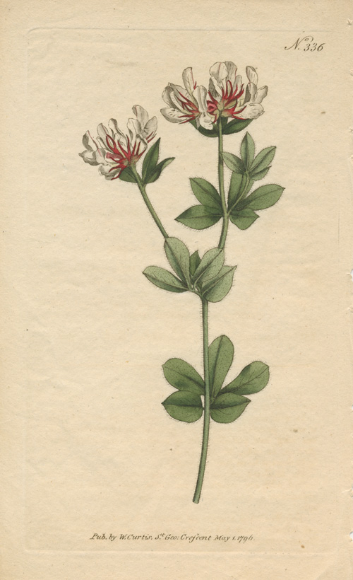 William Curtis hand-coloured botanical engraving Number 336, c1796