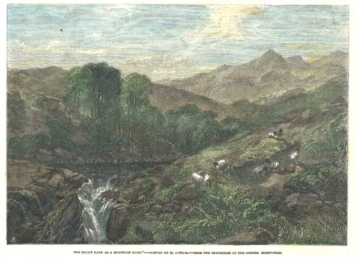 Sheep. The Rocky Path of a Mountain Burn. Painted by H. Jutsum. c1845