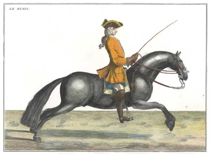 "18thC Perfect Modern Horse Management 1. ""The Robust"""