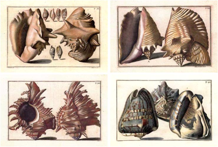 50%-off 4 x Heritage Editions small shells prints by Gualtieri