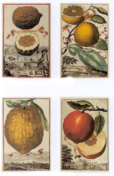 50%-off 4 Heritage Editions Fruit with Ribbons prints, by Volckamer