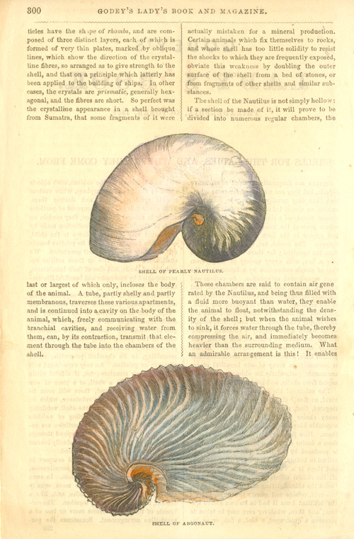 Godey's Lady's Book page: Nautilus and Argonaut shells c1856.