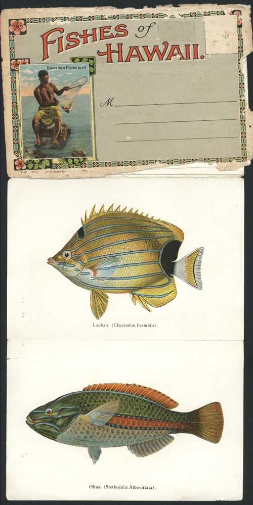 Marine-life. Fish illustrations. Fishes of Hawaii. Colour-plate Booklet c1930