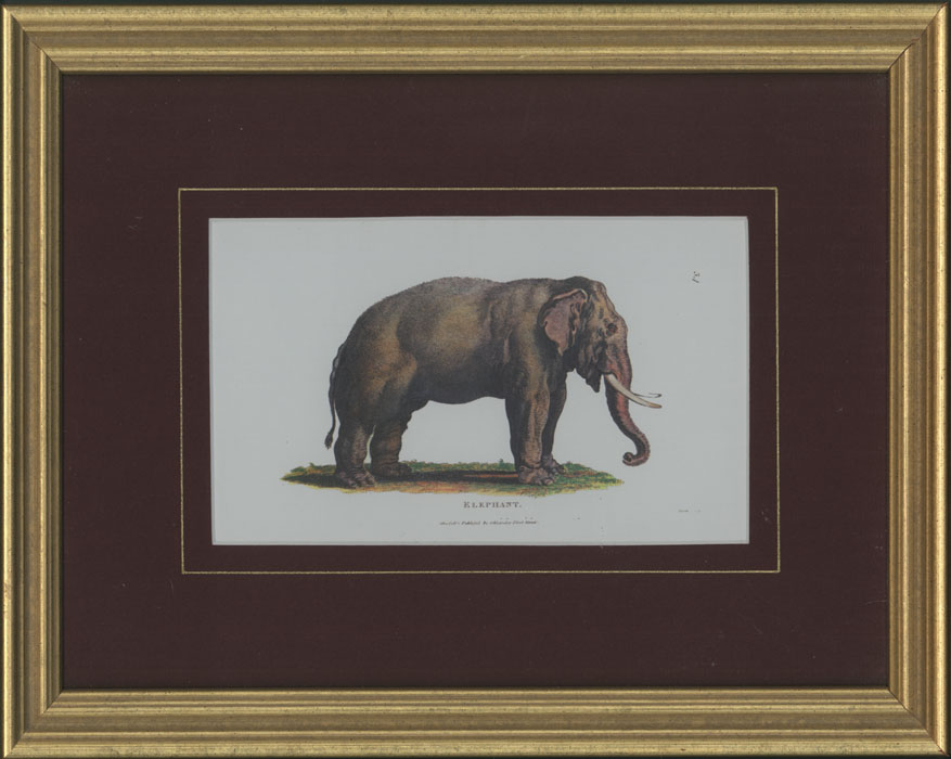 Small Elephant, framed in gold with wine-coloured mount.