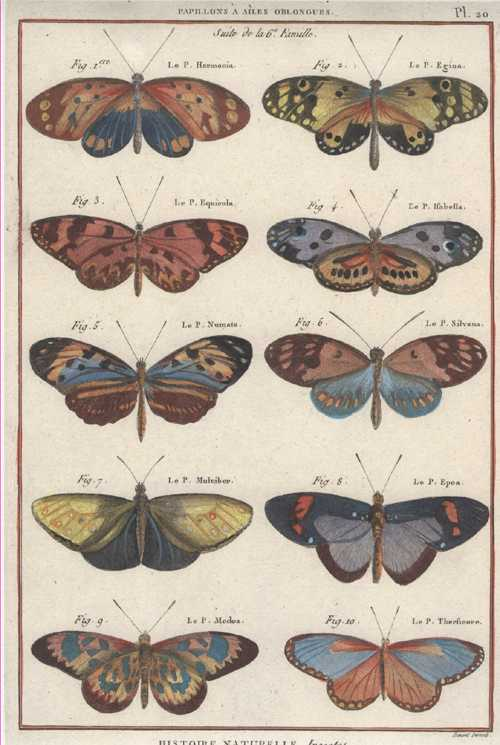 Butterflies, oblong-winged. Histoire Naturelle, Insectes. Benard for Panckouke. Pl.20