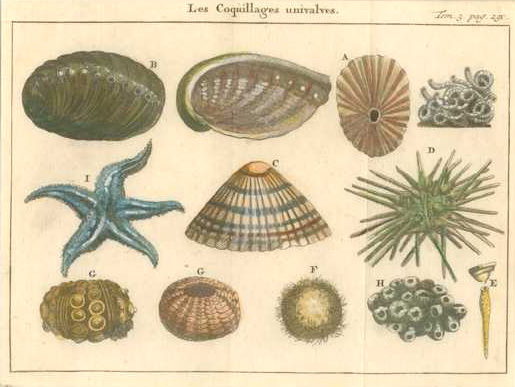 Antique Print of Univalve Shells. Les Coquillages Univalves. c1742