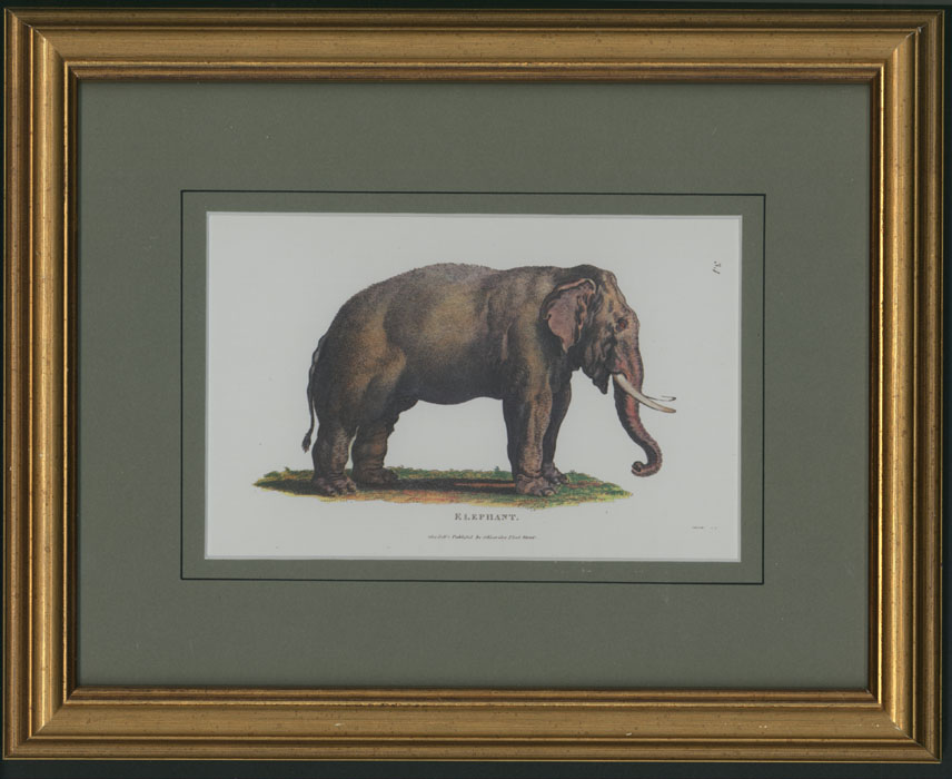 Small print of Elephant. Green mount in gold frame.