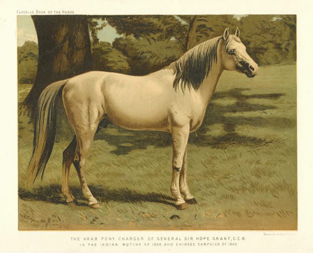 Arab Pony Charger of General Sir Hope Grant, G.C.B. Cassell c1874.
