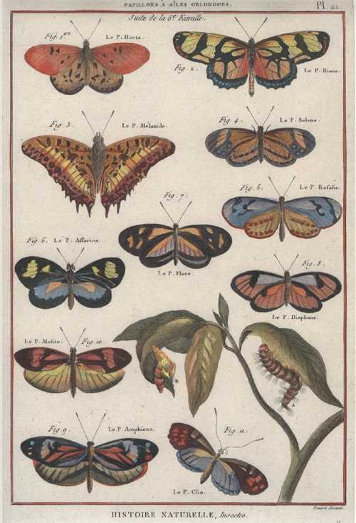 Butterflies, oblong-winged. Histoire Naturelle, Insectes. Benard for Panckouke. Pl.21