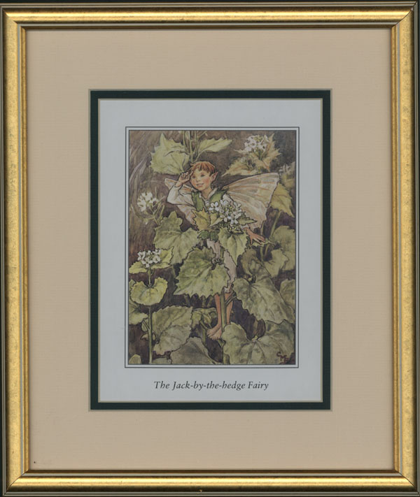 Small Flower Fairy, Jack-by-the-Hedge Flower Fairy, framed.
