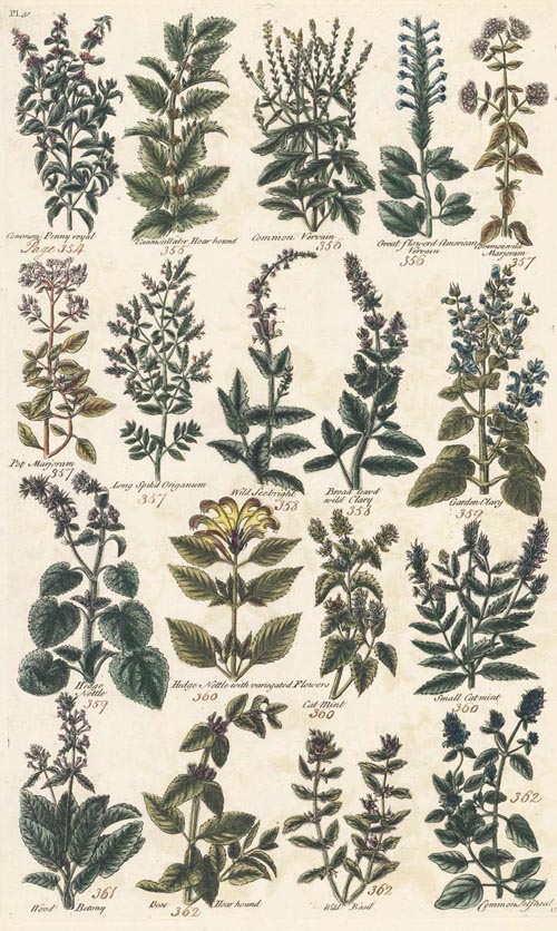 18th century engraving of Herbs by Sir John Hill. c1786.