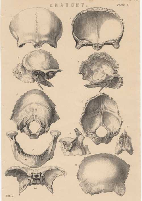 Head Anatomy. Osteology. Sections of Cranium Anatomy Plate 5. c1880