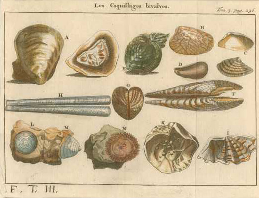Antique Print of Bivalve Shells, Les Coquillages Bivalve, c1742