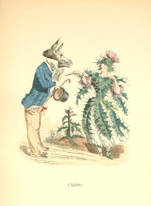 Donkey and Thistle. Grandville's Animated Flowers antique print.
