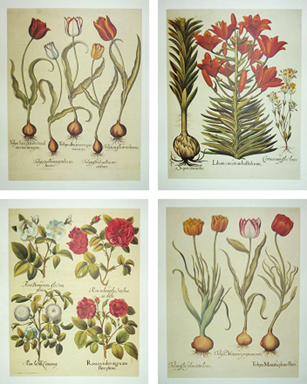 Half-price: 4x Heritage Editions Besler large flower prints