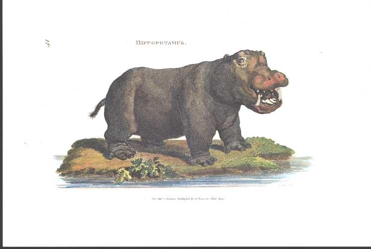 Hippopotamus by George Shaw. Small Heritage Editions print.