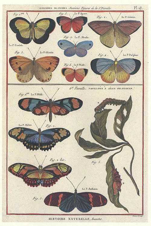 Colourful butterflies. Lepidoptera. Reproduction print. Panckouke Plate 18