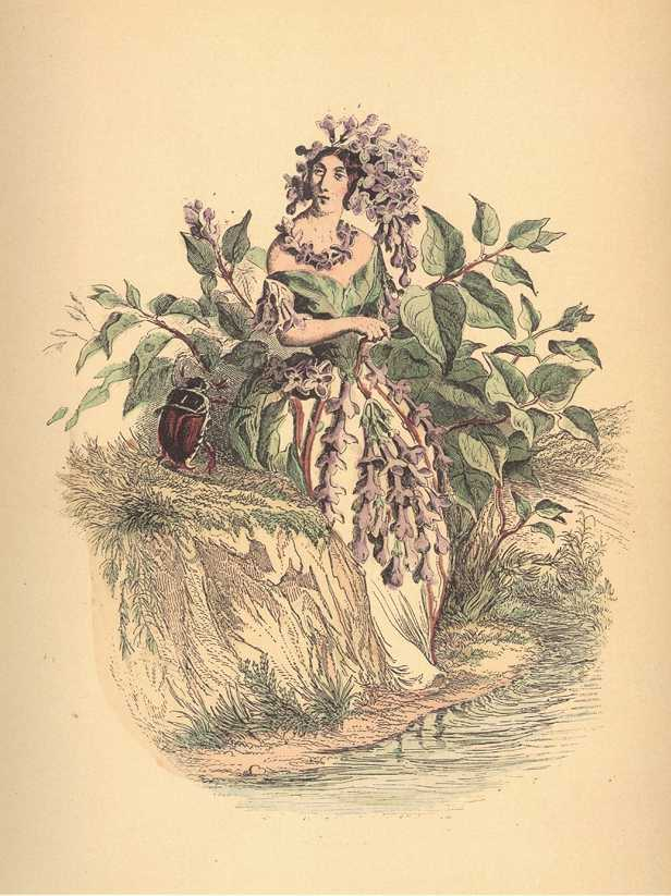 Lilac Flowerlady with beetle. Grandville flower-lady print.