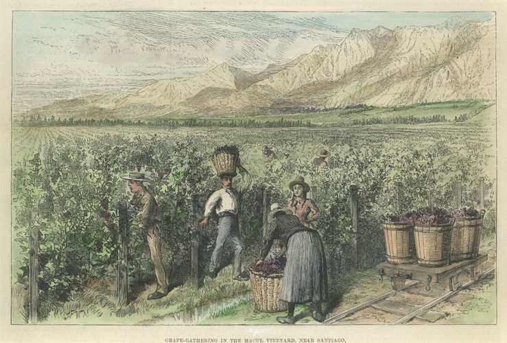 Wine-making in Chile. Grape-gathering near Santiago. Antique Print c1889