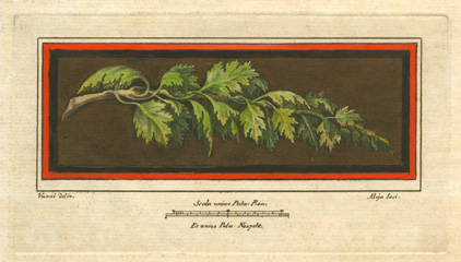 Oak tree branch. Herculaneum fresco engraving c1757.