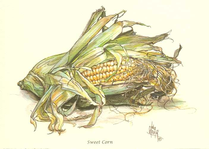 Small Sweet Corn image by Julia Crainer. Reproduction print.