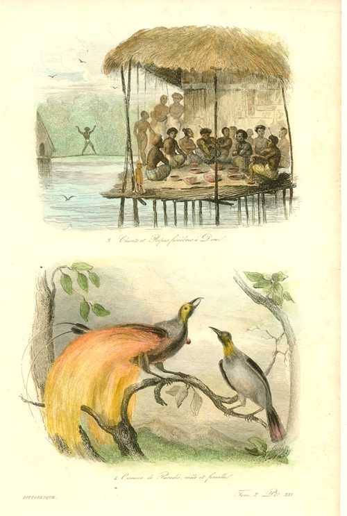 Natives at Dorei. Birds of Paradise. Dumont d'Urville, c1834.