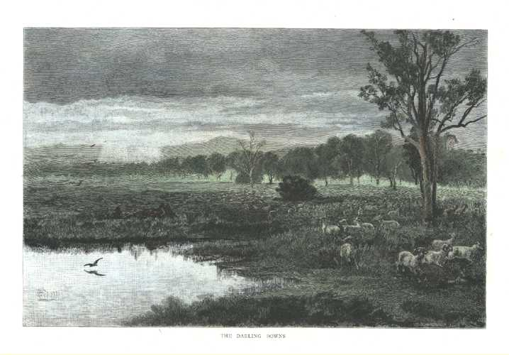 Darling Downs antique print c1886. Australian sheep and farming