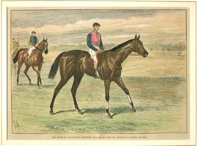 Racehorses. The Duke of Portland's Ayrshire. Winner. c1888