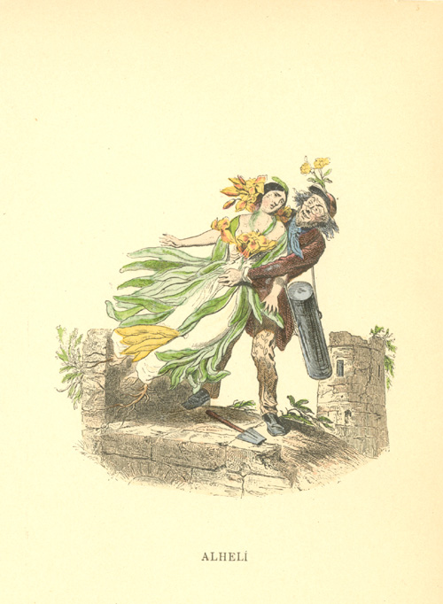 Wallflower being carried away. Grandville flower-lady engraving c1902.