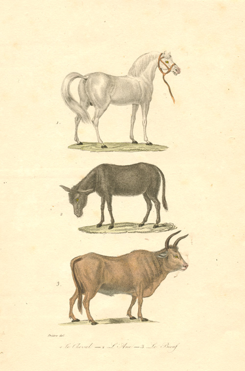 Le Cheval, L' Ane, Le Boeuf. (Horse, Donkey and Cattle) c1838.