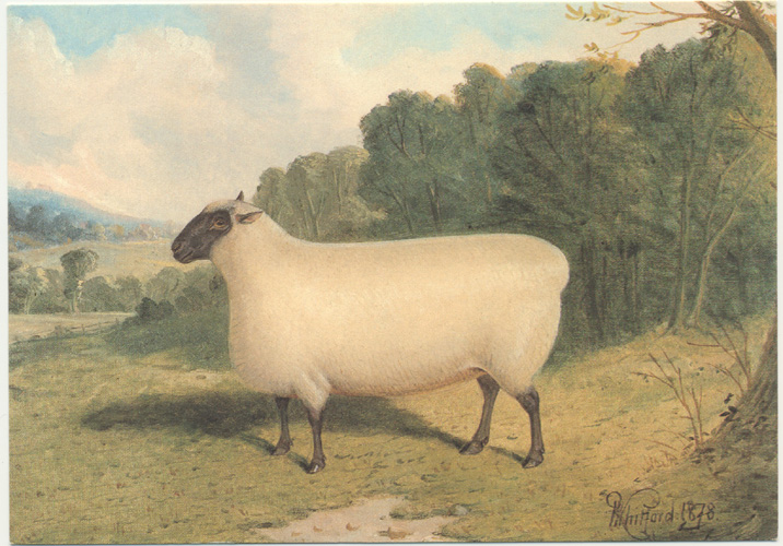 A Prize Shropshire Ewe after Whitford painting 1878.