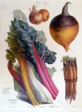 Vilmorin Vegetables: Swiss Chard, Onions, Turnips.. reproduction print.