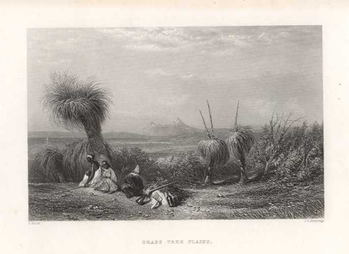 Australian Xanthorrhoea 'Black Boy' on Grass Tree Plains. Zanthorea Engraving c1874