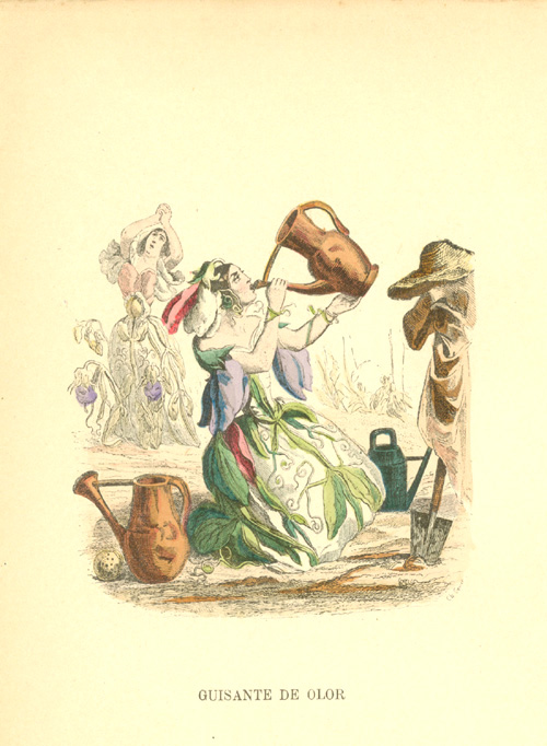 Sweet Pea drinking from watering-can. Guisante de Olor (Spanish) c1902.
