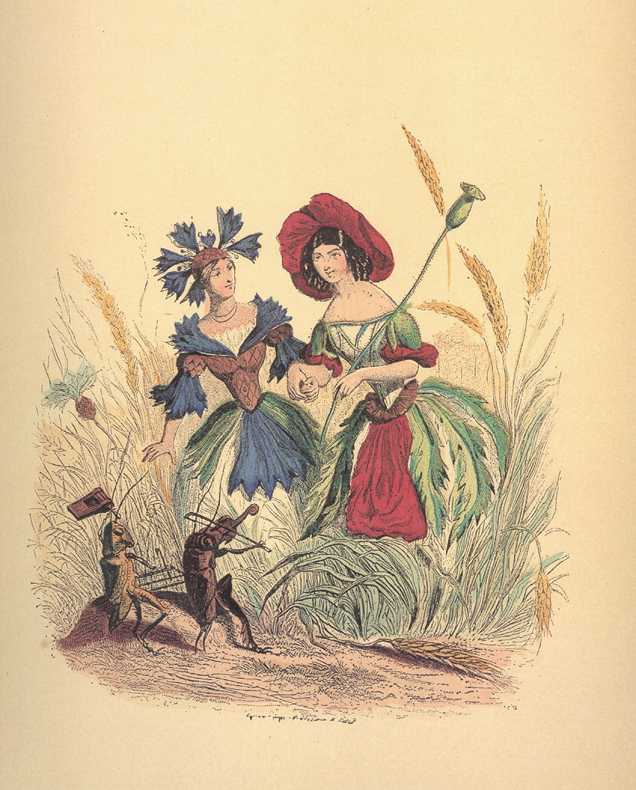 Grandville Flowerladies. Cornflower & Poppy with grasshopper musicians print.