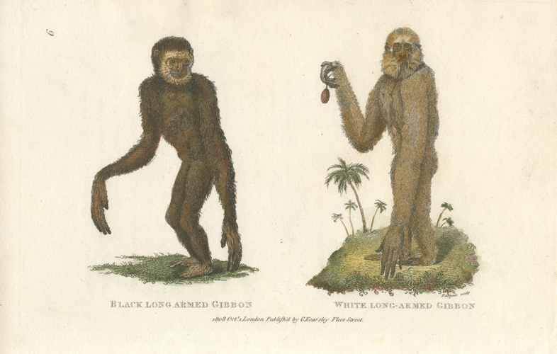 Image result for gibbon old print
