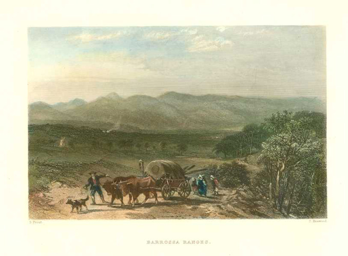 Barrossa Ranges early settlers with bullock cart c1874.