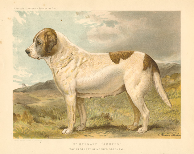 "St. Bernard. ""Abbess"" lithograph after Charles Burton Barber."