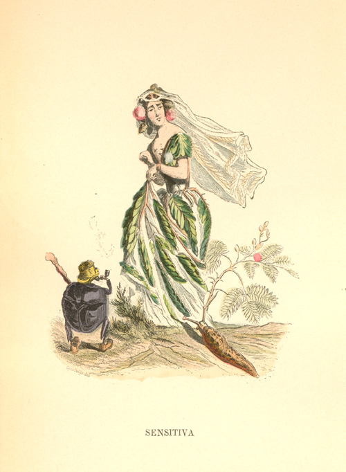 Sensitiva. Sensitive Mimosa with top-hatted pipe-smoking beetle suitor. c1902.