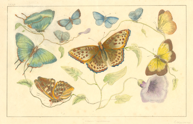 Half Price Bargain! Pretty Butterflies with coloured background.