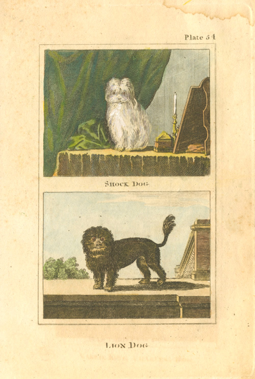 Small engraving of Shock Dog and Lion Dog. Buffon c1790.