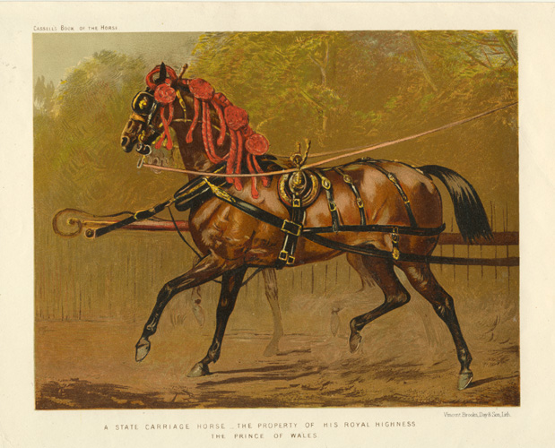 A State Carriage Horse of his Royal Highness the Prince of Wales, c1874.