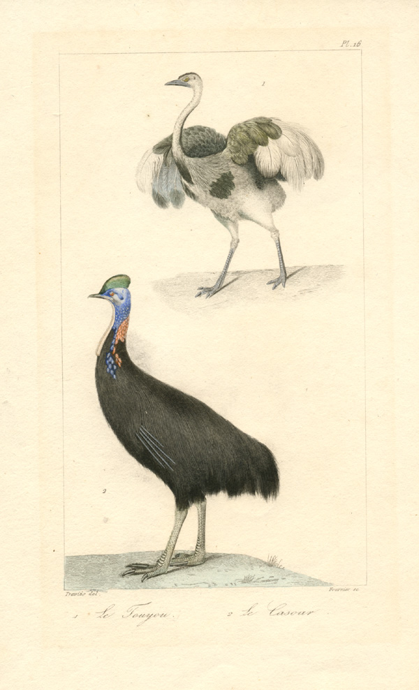 Le Touyou (Ostrich) and Le Casoar (Cassowary). Fournier engraving after Travies c1820.