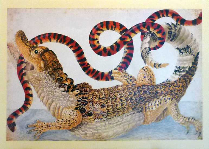 Spectacular print of Alligator with a Snake