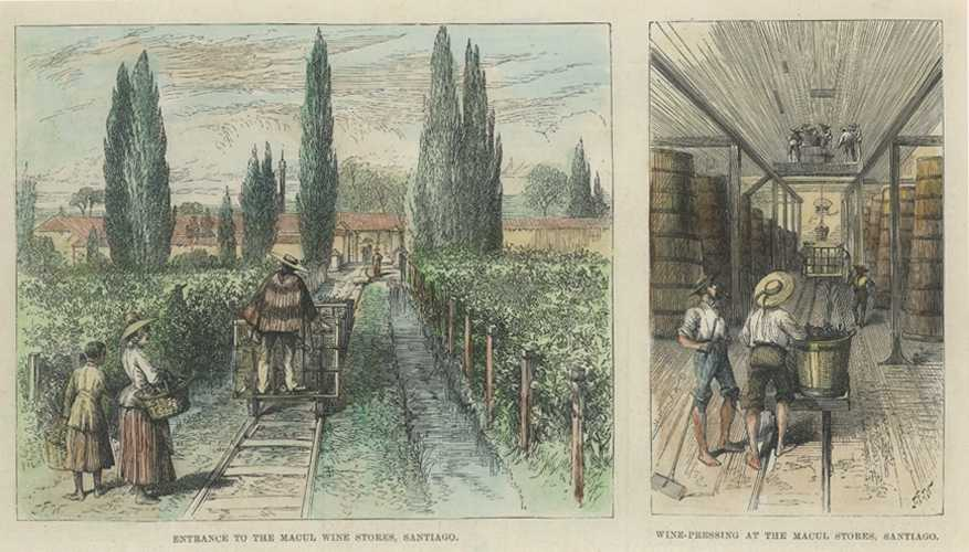 Wine-making in Santiago, Chile. Chilean Wine Making antique Engraving c1889.
