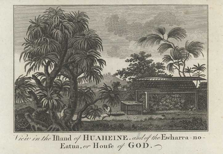 French Polynesia 1885 old antique print Landscape in the Tuamotu Archipelago