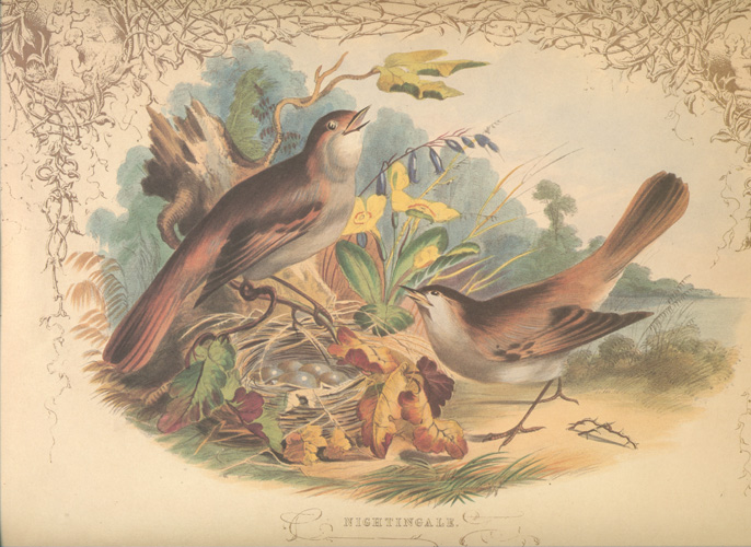 William Dexter, Nightingales on Nest with eggs. Reproduction print.
