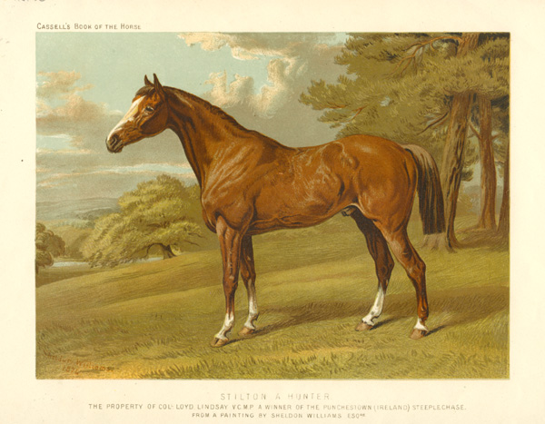 Stilton, a Hunter from a painting by Sheldon Williams. Cassell c1874.