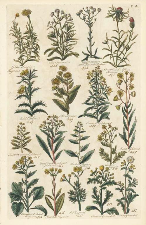 British Herbal Plate 64. John Hill antique print c1756